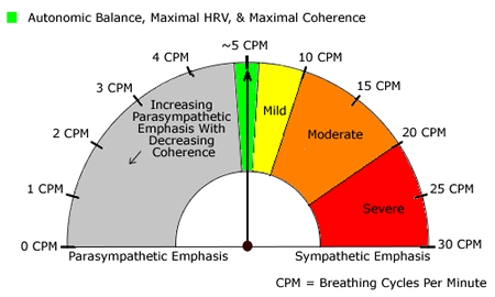 homeostasis and breathing rate